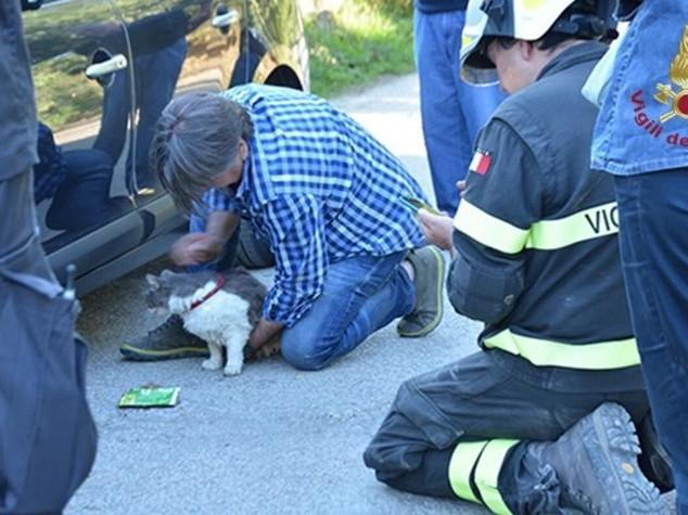 Amatrice: il gatto Rocco salvato 32 giorni dopo il terremoto