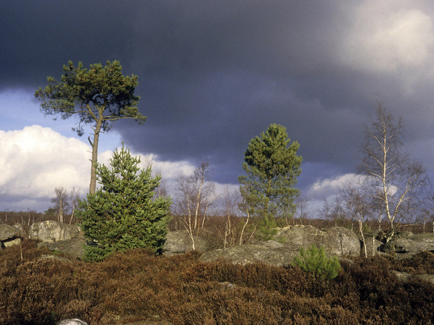 Aereo scarica kerosene su foresta Fontainebleau, polemica in Francia