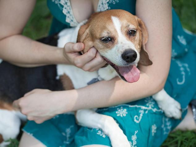 Salute: ad Ancona pet-therapy per combattere il parkinson