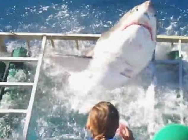 Sub in gabbia con lo squalo - Video