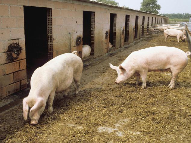 Terremoto: 3mila aziende agricole a rischio