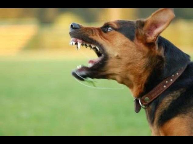 Azzannata dal cane del padre in giardino, muore bimba di 3 anni a Roma