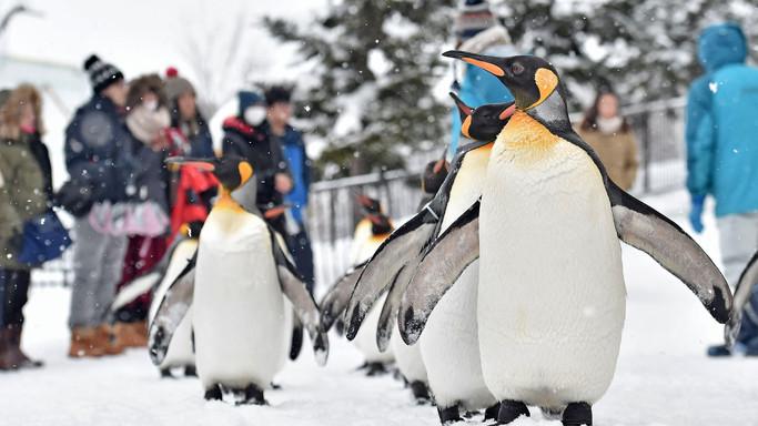 La 'ginnastica' dei pinguini e le altre foto della giornata