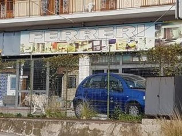 Palermo tigre bianca scappata dal circo carabinieri intervengono