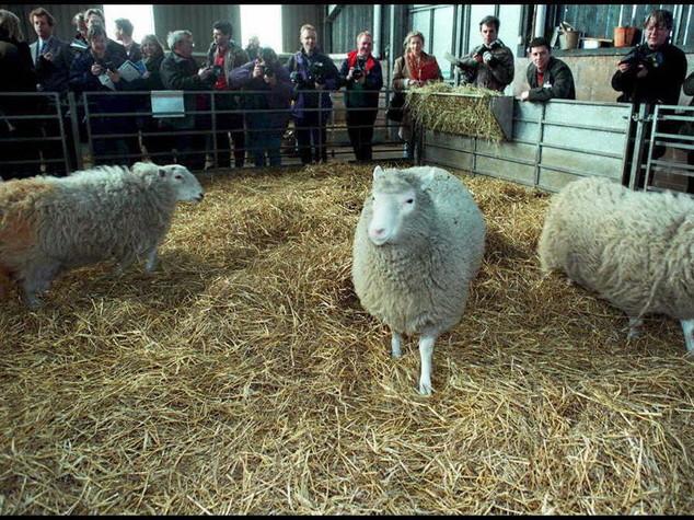 Dall'indipendenza dell'Algeria alla pecora Dolly. I fatti del 5 luglio