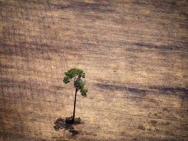 Ogni settimana viene ucciso un uomo che cerca di difendere l'ambiente