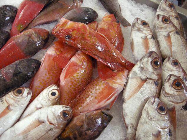 I numeri che hanno innescato la protesta dei pescatori