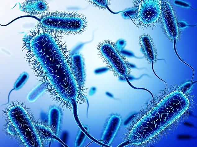 I 12 batteri ultracattivi che resistono agli antibiotici