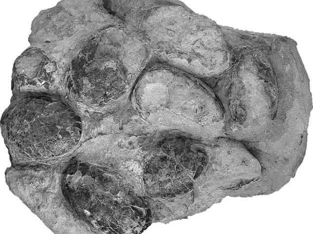 Trovate le uova di coccodrillo più antiche al mondo: hanno 150milioni di anni