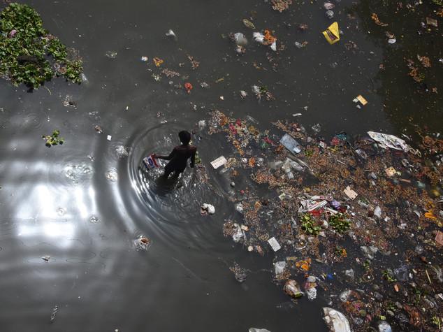 L'inquinamento di Delhi uccide anche le vacche sacre