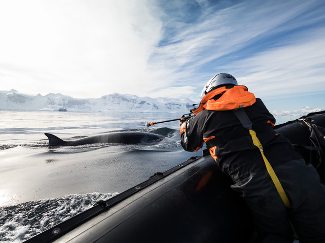 Giappone riprende caccia balene