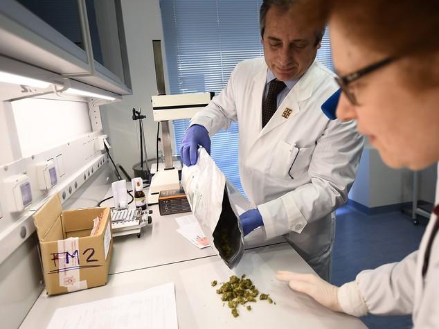 """Sette farmacie multate per aver """"pubblicizzato la cannabis"""""""