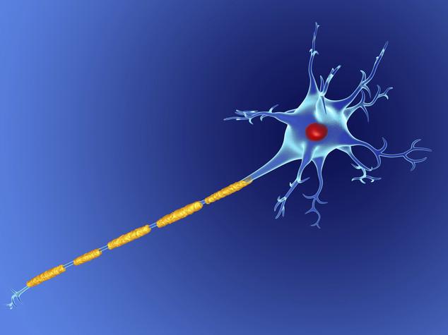 Trapianteremo le staminali nel cervello dei malati di sclerosi multipla