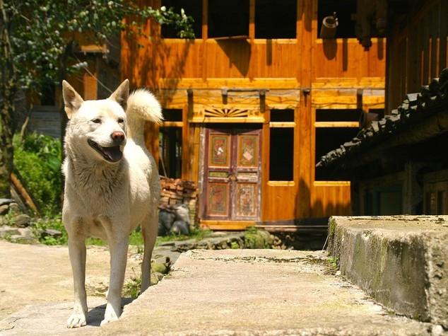 Un'altra città cinese vara la politica del... 'cane unico'