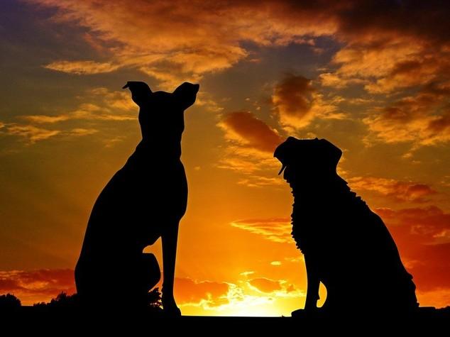 Come assicurare cani e gatti e partire sereni per le vacanze