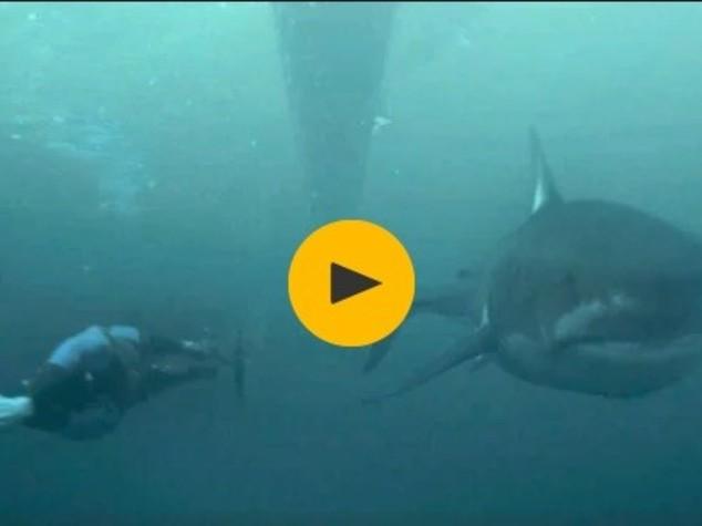 L'incredibile flop di Phelps contro lo squalo. Ma non perché ha perso
