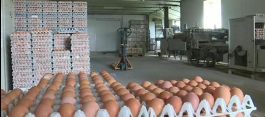 In Italia non sono arrivate uova contaminate. Almeno per ora