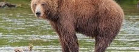 Così l'uccisione di un'orsa in Trentino è diventata una polemica senza fine