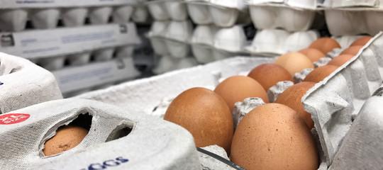 Quanto ci dobbiamo preoccupare per le uova al fipronil 'made in Italy'