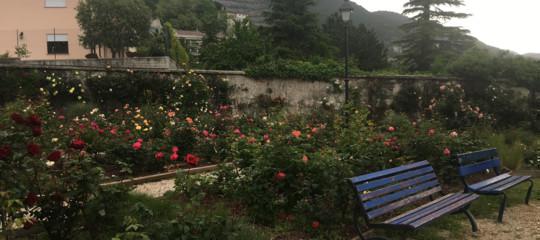 Quelle rose dimostrano che tutto può essere cambiato