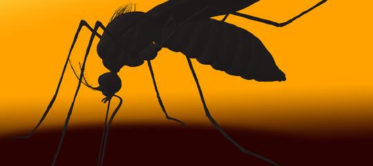 La malaria d'aeroporto. Così la zanzara è diventata un fenomeno globale