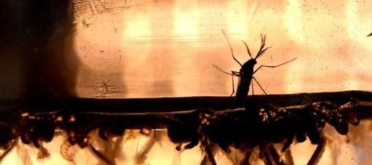 Che cos'è l'infezione Chikungunya e quali zanzare la trasmettono