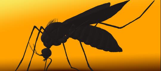 La febbre chikungunya è diventata un caso politico e Zingaretti accusa Raggi