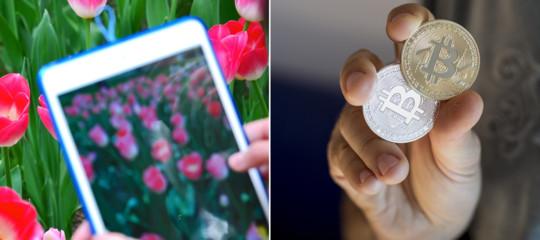 Perché ogni volta cheBitcoinha un forte rialzo parliamo dei tulipani?