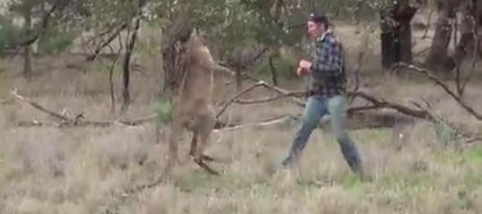 Perché in Australia si dovranno uccidere (e mangiare) migliaia di canguri