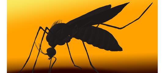 Il virus chikungunya ha conseguenze sulla salute generale delle persone o no?