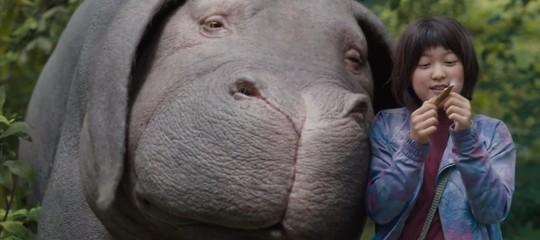 Il caso dei 'suini-hulk' cambogiani. Sono davvero geneticamente modificati?