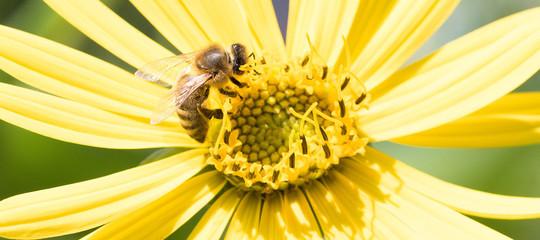 Il 75% del miele nel mondo ècontaminato. Ecco la causa