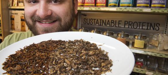 2.000 specie di insetti sono pronte per la tavola degli italiani. E sanno di pollo