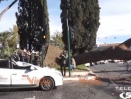 Un pino crolla e schiaccia un taxi a Roma. Un ferito