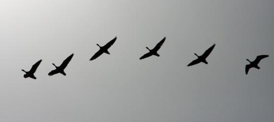 Continua la strage di uccelli in Europa, il record resta all'Italia e ai cieli mediterranei