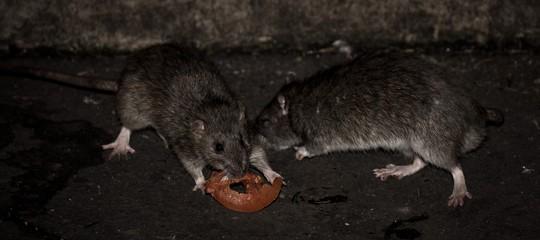 25milaparigini sono pronto adare battagliaper salvare i topi di fogna