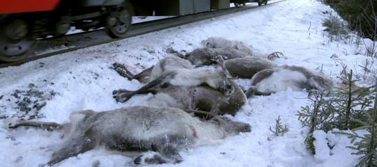 Chi ha ucciso 100 renne a meno di un mese dal Natale?