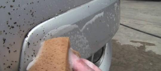 Perché non troviamo più insetti sul parabrezza dell'auto (l'avevate notato?)