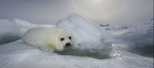 Camminiamo sopraun ghiaccio semprepiù sottile