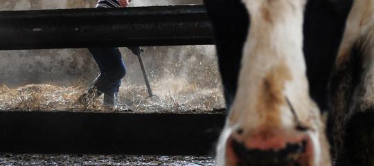 Perché la Cina ha tolto il veto alle carni bovine italiane