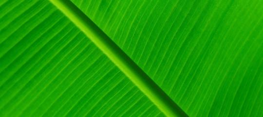 La fotosintesi artificiale