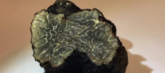 Vicino la TorreEiffelè cresciuto un tartufo nero di 21 grammi. Le immagini