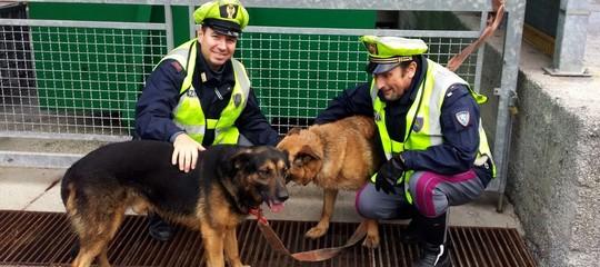 Scappano spaventati dai fucilidei cacciatori, la polizia salva due cani sullaA12