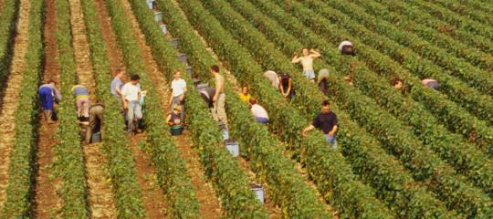 Perchè i fondi UE non bastano a convincere i giovani a lavorare in agricoltura