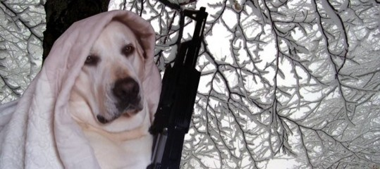 Dagli Usa l'uomo che morde il cane. In Russia il cane che spara all'uomo