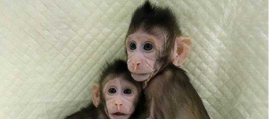 Quali vantaggi porterà la clonazione alla medicina?