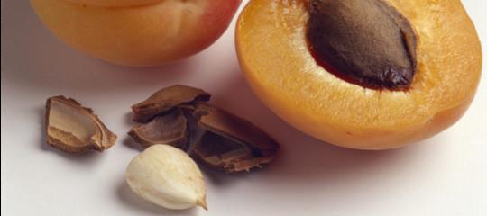 I semi di albicocche sono velenosissimi. Cosa ha fatto l'Ue per proteggere i consumatori