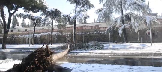 Dopo la neve a Roma c'è un reale rischio di caduta alberi?