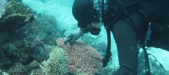 """""""Studio i coralli e vi dico che il Pianeta è un malato grave"""""""