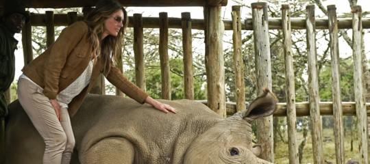 La morte dell'ultimo rinoceronte bianco è una pessima notizia per l'umanità